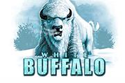 White Buffalo